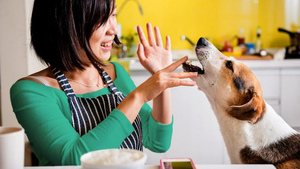 Safety First: 12 Pet Safety Tips for Pet Owners